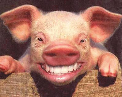 THE SMILING PIGSKIN